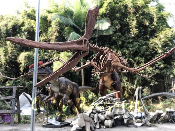Real Dinosaur Fossils for sale Pterosaur Replica2