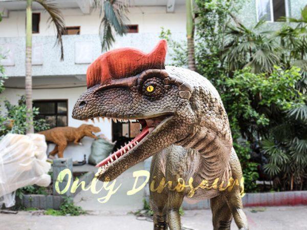Realistic Animatronics Dilophosaurus for Dinosaur Park5