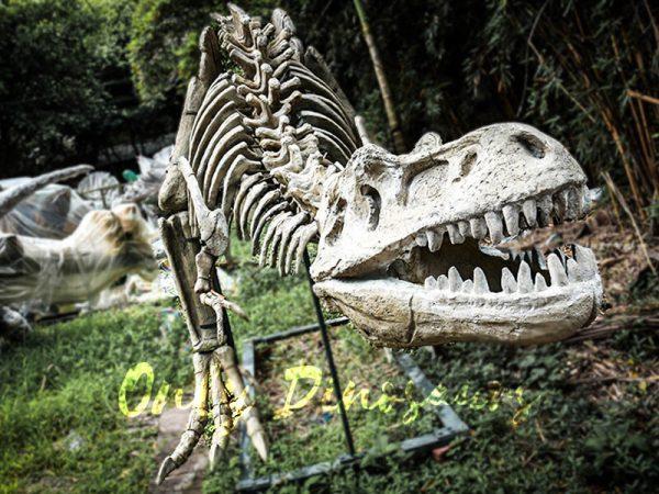 Realistic Tyrannosaurus Dinosaur Skeleton Models2