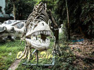 Realistic T-Rex Dinosaur Skeleton Models