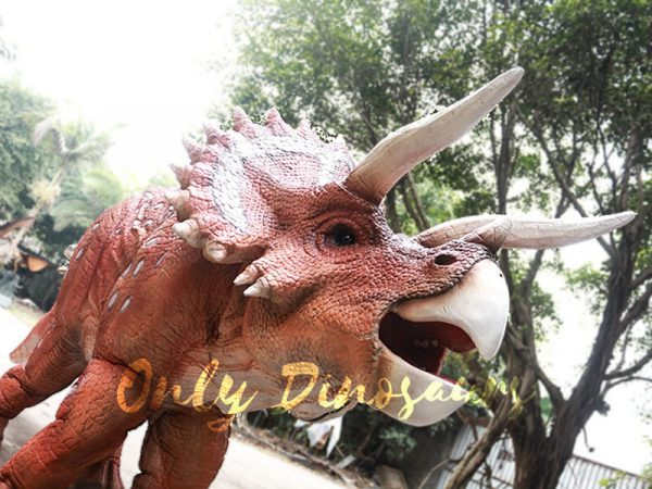 Red Triceratops 2 Person Costumes for School4