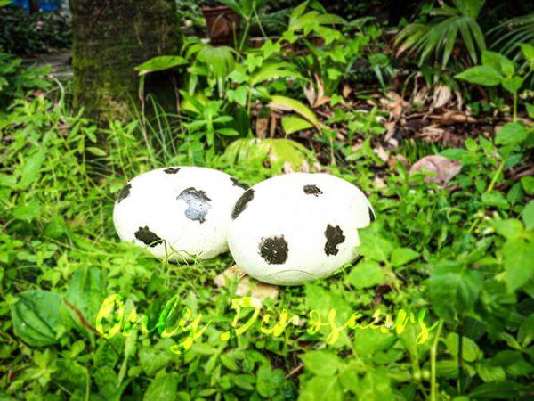 Spot Fiberglass Statue Dinosaur Eggs in pair for sale4