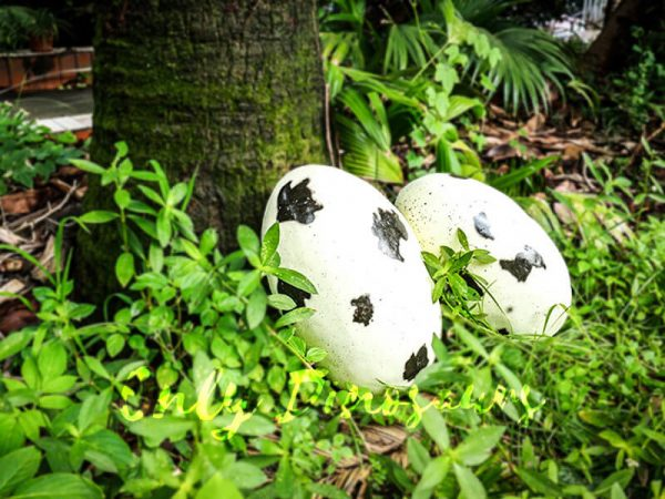 Spot Fiberglass Statue Dinosaur Eggs in pair for sale5