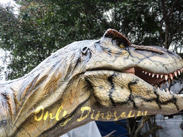T Rex Animatronic Dinosaur Exhibit for sale5