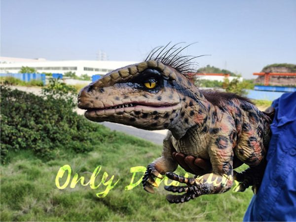 Baby Raptor Pantherine False Hand Puppet3