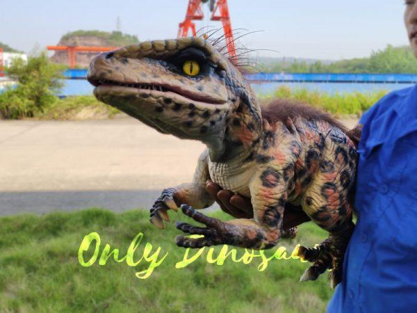 Baby-Raptor-Pantherine-False-Hand-Puppet5-1