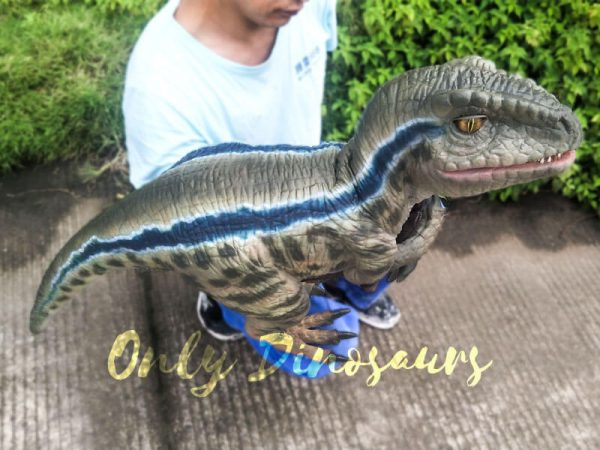 Baby Raptor Realistic Puppets for sale1