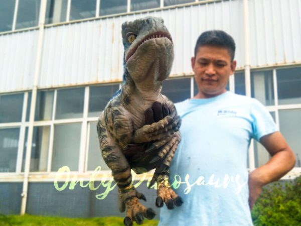 Baby Raptor Realistic Puppets for sale2