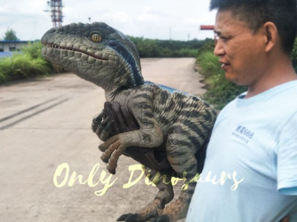 Baby Raptor Realistic Puppets for sale5