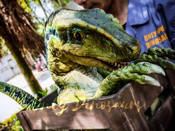 Baby Velociraptor Crate Puppet Cute For Kids1