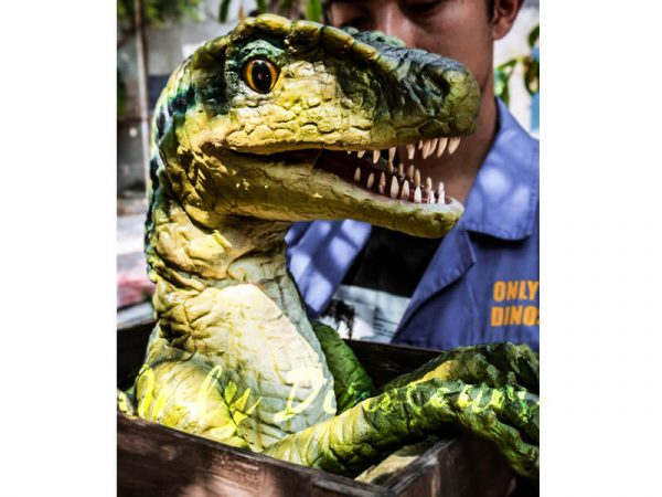 Baby-Velociraptor-Crate-Puppet-Cute-For-Kids2