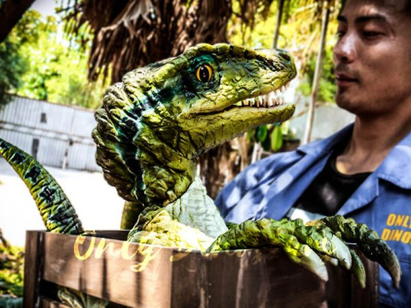 Baby Velociraptor Crate Puppet Cute For Kids6