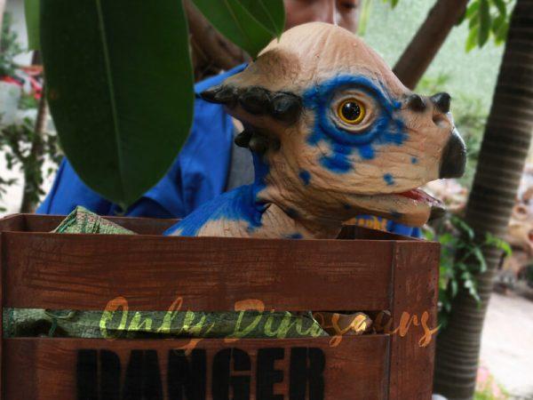 Dinosaur-Stygimoloch-Crate-Puppet-Blue-Spot6