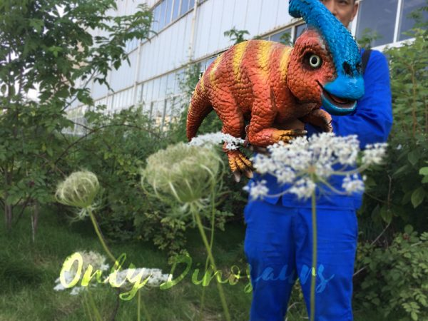 Life-Size-Parasaurolophus-Puppets-For-Baby6-1