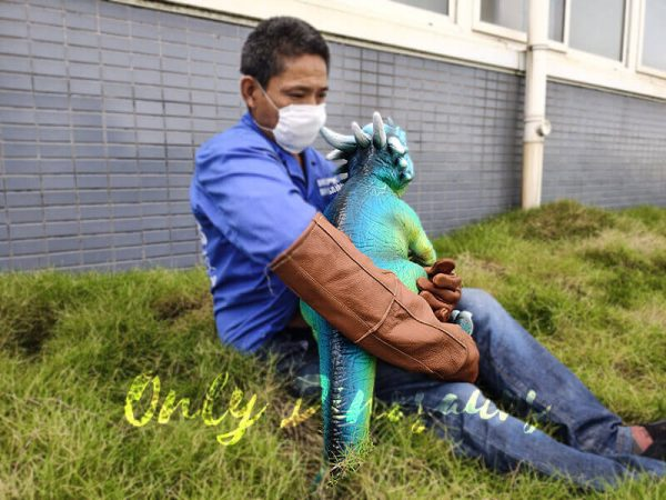 Life like Stygimoloch Puppets with Fake Arm4