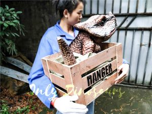 Lifelike Baby Protoceratop Dinosaur Puppet in Crate