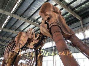 Lifesize Palaeoloxodon namadicus Skeleton for Museum