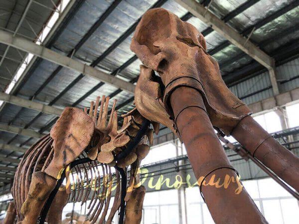 Lifesize Palaeoloxodon namadicus Skeleton for Museum6
