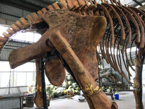 Lifesize Palaeoloxodon namadicus Skeleton for Museum7