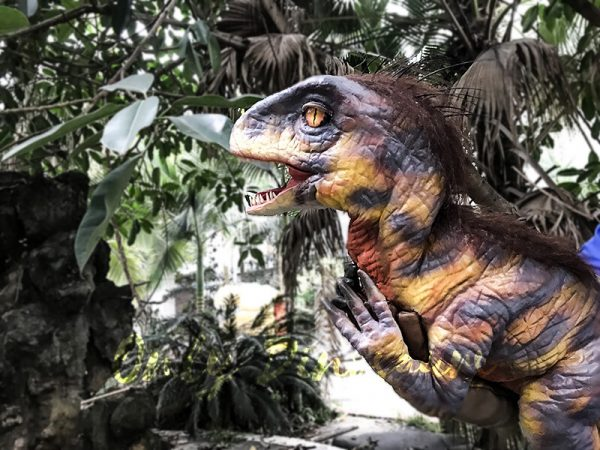 Raptor Dinosaur Glove Puppet Feathered Puppet2