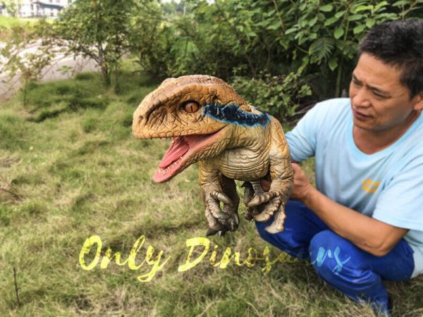 Raptor Lifesize Puppet for Arm Control3