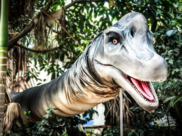 Realistic Brachiosaurus Dinosaur Head Prop5