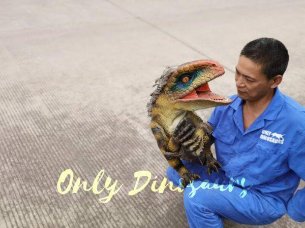 Beautiful-Feathered-Raptor-Handheld-Puppet6
