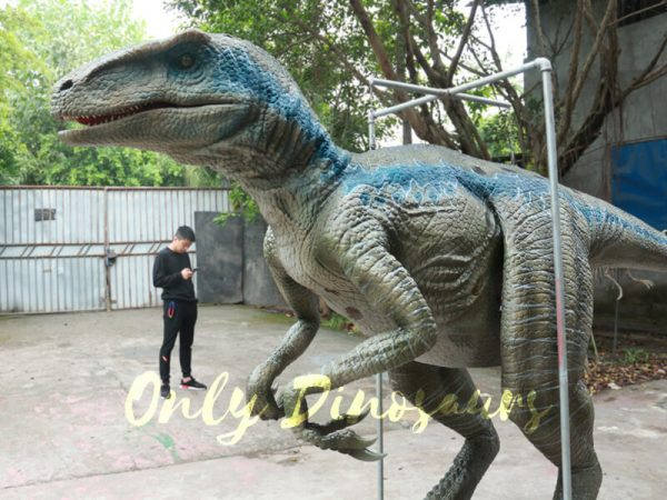 Blue Raptor Costumes with Fine Details11