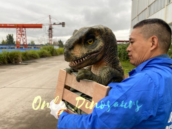 Lifelike-Crate-T-Rex-Baby-Puppet