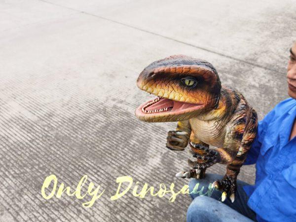Stage-Show-Life-Size-Handheld-Velociraptor