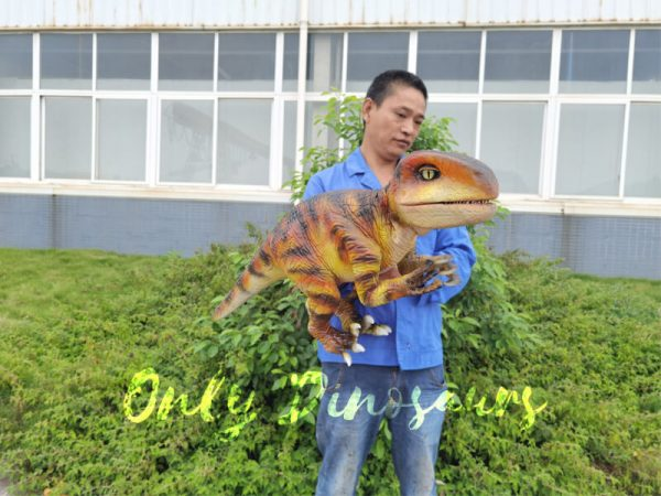 Stage-Show-Life-Size-Handheld-Velociraptor1