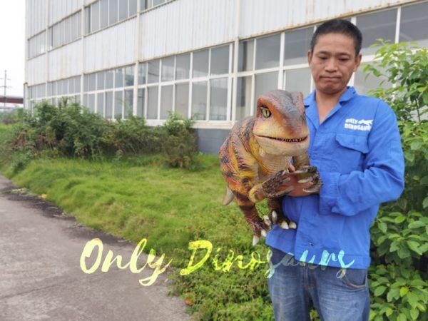 Stage-Show-Life-Size-Handheld-Velociraptor2