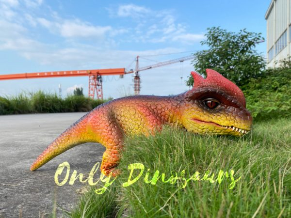 Fascinating-Dilophosaurus-Dino-Puppet-for-Woman6