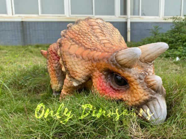 Lifelike-Orange-Triceratops-Baby-Dino-Puppet3