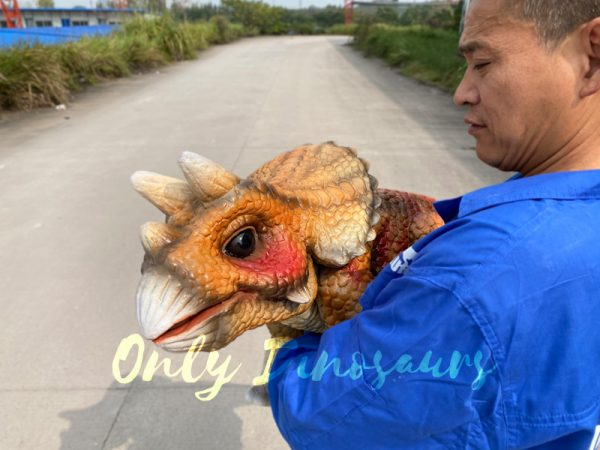 Lifelike-Orange-Triceratops-Baby-Dino-Puppet6