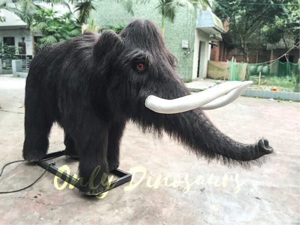 Emulational-Mammoth-Family5.JPG