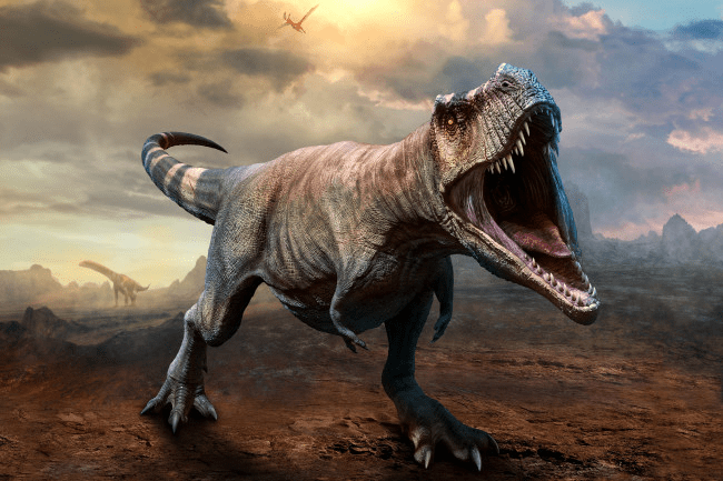 Pets-that-look-like-dinosaurs-Domesticated-Chicken-2