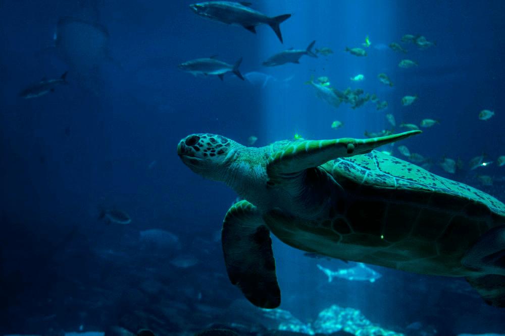 Pets-that-look-like-dinosaurs-Sea-Turtles