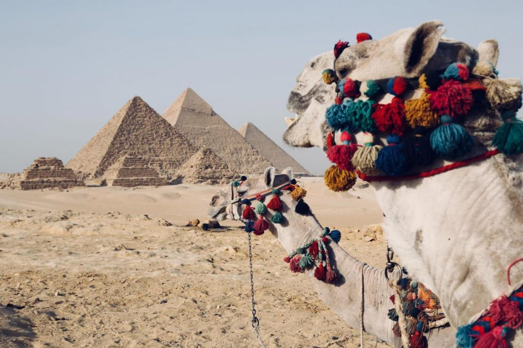 new-years-eve-traditions-A-Camel-at-Egypt