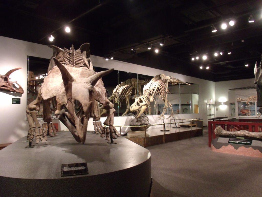 14-16-Best-Dinosaur-Exhibits-in-America-2021Mesa-Arizona_Museum_of_Natural_History-1