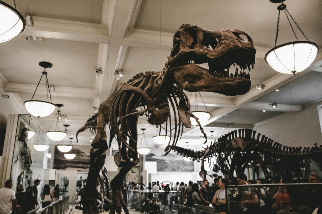 2-16-Best-Dinosaur-Exhibits-in-America-2021american-museum-of-natural-history