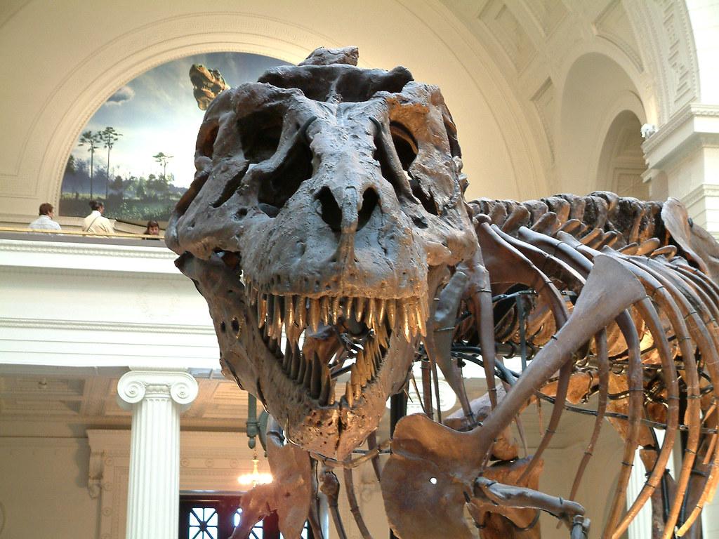 23-16-Best-Dinosaur-Exhibits-in-America-2021-field-museum