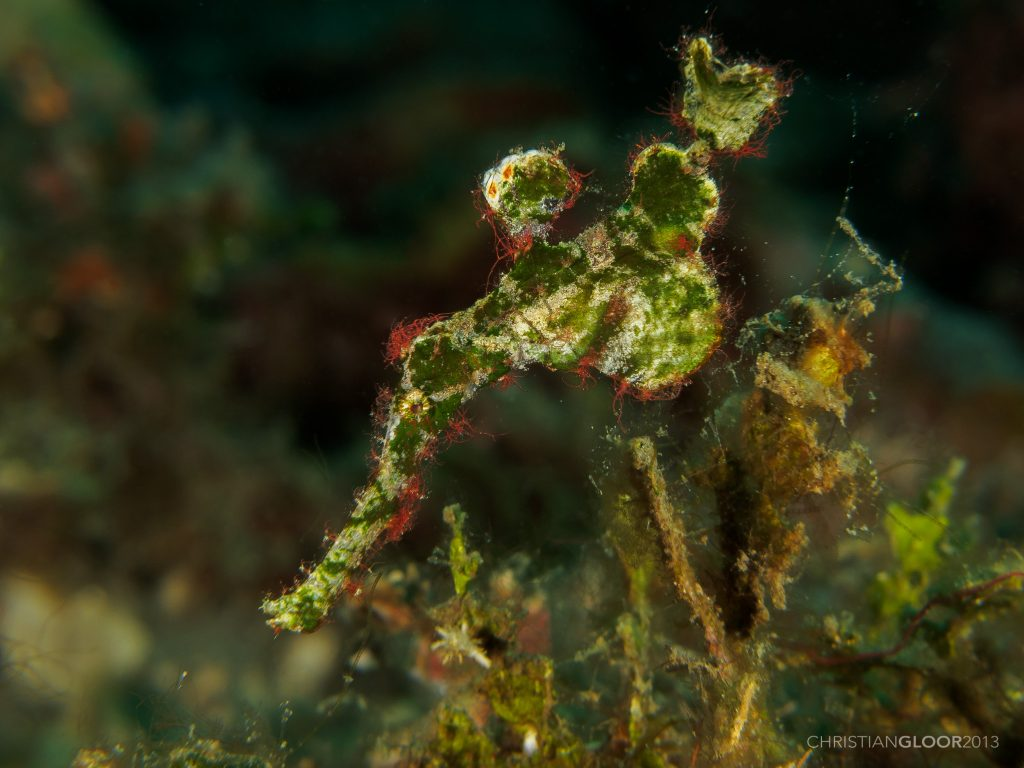 25-Mysterious-Sea-Creatures-That-Are-Bizarre-And-Rare-Halimeda-Ghost-Pipefish