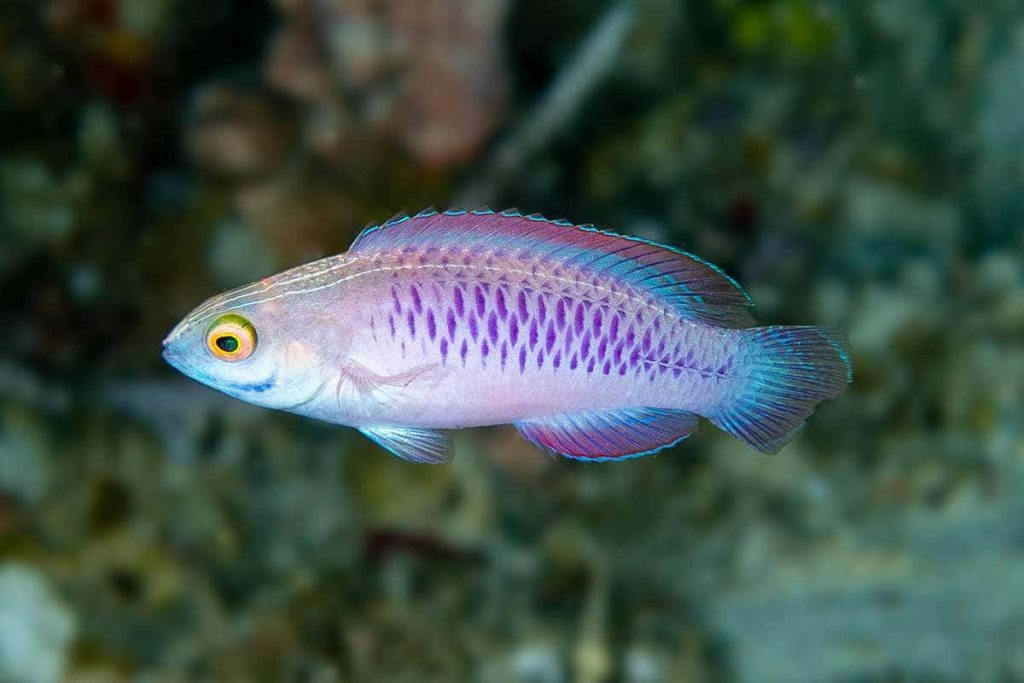 25-Mysterious-Sea-Creatures-That-Are-Bizarre-And-Rare-The-Wakanda-Fish