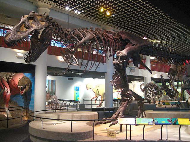 3-16-Best-Dinosaur-Exhibits-in-America-2021-Academy-of-natural-sciences-of-drexel-university