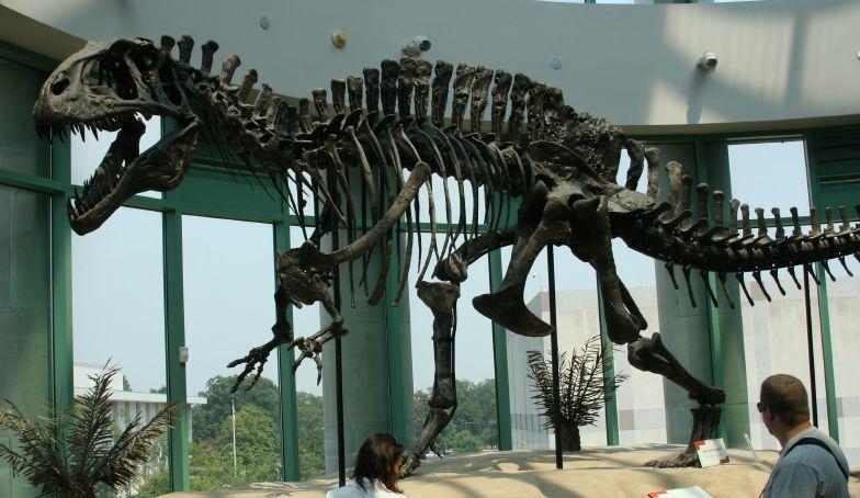6-16-Best-Dinosaur-Exhibits-in-America-2021Acrocanthosaurus_skeleton_1