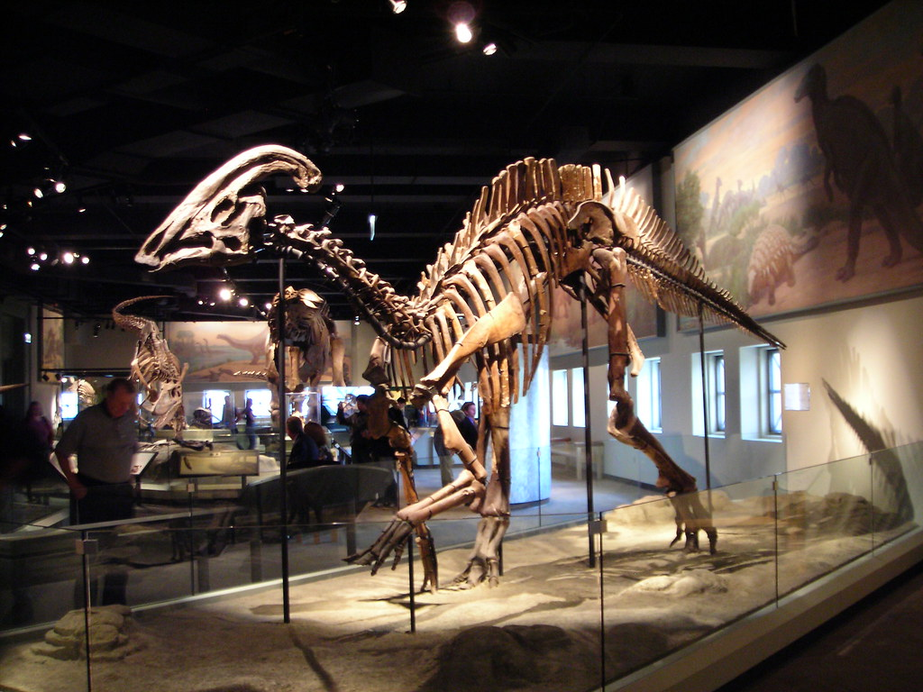 916-Best-Dinosaur-Exhibits-in-America-2021-field-of-natural-history-chicago-lllinois-1