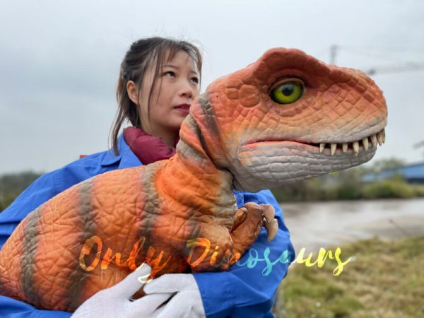 Adorable-Baby-T-rex-Puppet-with-False-Arm-2
