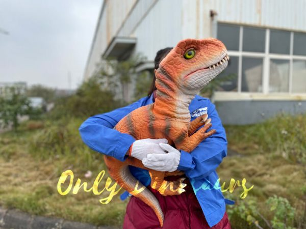 Adorable-Baby-T-rex-Puppet-with-False-Arm-3