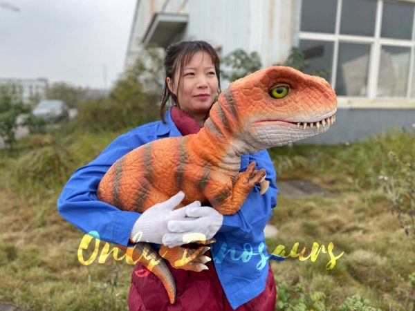 Adorable-Baby-T-rex-Puppet-with-False-Arm-5